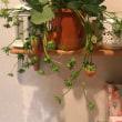 2・24・桃の花とイチゴの苗