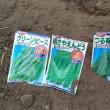 サヤエンドウの播種