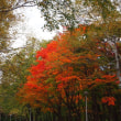 真駒内公園 2018年10月