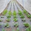 葉物植えて種蒔き、そして、ネットと不織布の効果が凄いな