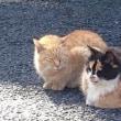 ご近所散歩〈6〉 太宗寺3 ~猫たち~