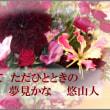 俳句写真1589 花ありて