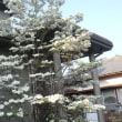 春の花が満開です。