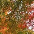 地蔵院の紅葉