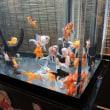 マリエントの金魚たち