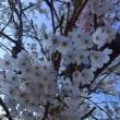 春といえば・・・!
