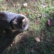 秋の猫と戯れる