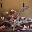 松戸市戸定邸の今(紅梅、ひな祭り、庭園は昔の姿に復元中)