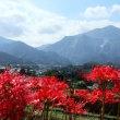 秋の爽やかな陽射しの中を 秩父路里山ウォーキングで・・・!!