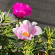 真夏に咲く お花たち