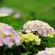 過去の写真~6月・花風景その3