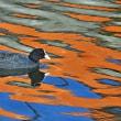 運河端の水鳥