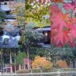古峯園の紅葉