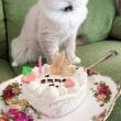 エマちゃん1歳おめでとう♪