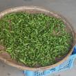 枝豆の収穫 その三