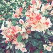 笑顔の花を