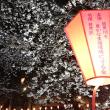 目黒川の夜桜