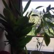愛しの 植物たち