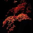紅葉 (花 4682)