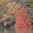 白鷺湖のオシドリは…?(11月18日)