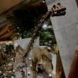 群馬県自然史博物館