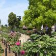 春を眺め、水辺のやすらぎパークの牡丹園へ③