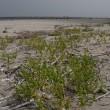 浜辺を散策してきたら・・・・巣を発見・・・