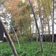 Open Garden~大澤邸