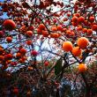 釣堀と柿の木
