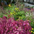我家の花壇