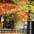 市内公園の紅葉