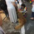 7月 商店街の盆踊り