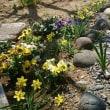 ティタティタが庭を盛り上げてくれる♪