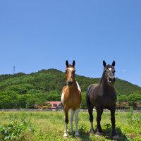 馬が笑う。