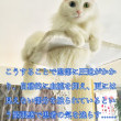 猫ドラマ   『白い巨塔』