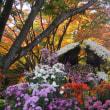 三島の楽寿園の菊まつり