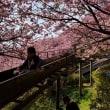 吊るし雛を求め~まつだ桜まつり