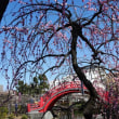 29年2月 亀戸天神社