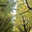 神宮外苑銀杏並木へ