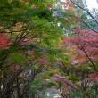 紅葉、その13