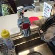 水をどうしても飲みたい猫+とばっちり猫
