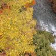 道志渓谷の自然:水と紅葉