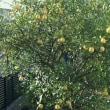 林檎🍎と檸檬
