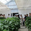 GAP(農業生産工程管理)の視察研修会を開催しました