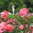 メモ帳832ページ バラの花に癒された日