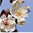 梅の香/一周忌