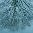 冬の水辺の揺らぎ