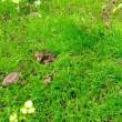 芝生、局所的にメッチャ繁殖してた