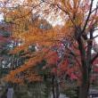 城山湖金刀比羅宮から筑波山遠望 2018.12.9