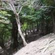 世界遺産大峯奥駆道を歩く  夏の終わりの南奥駈 行仙岳から平治宿を往復 2017年9月3日 その2